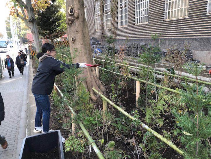 植樹後は表土を守るため、構内の落ち葉を3 年間寝かせた腐葉土を撒きました